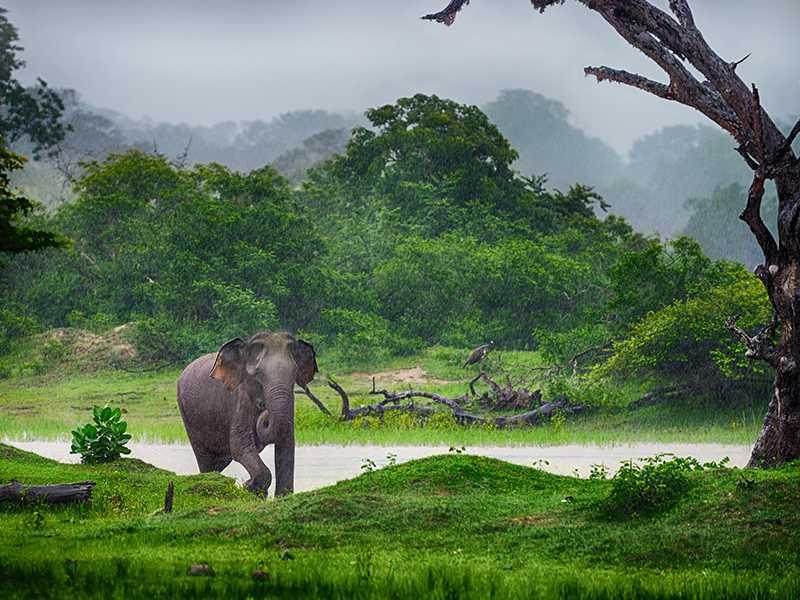 Elephant near a Lake at Wasgamuwa National Park