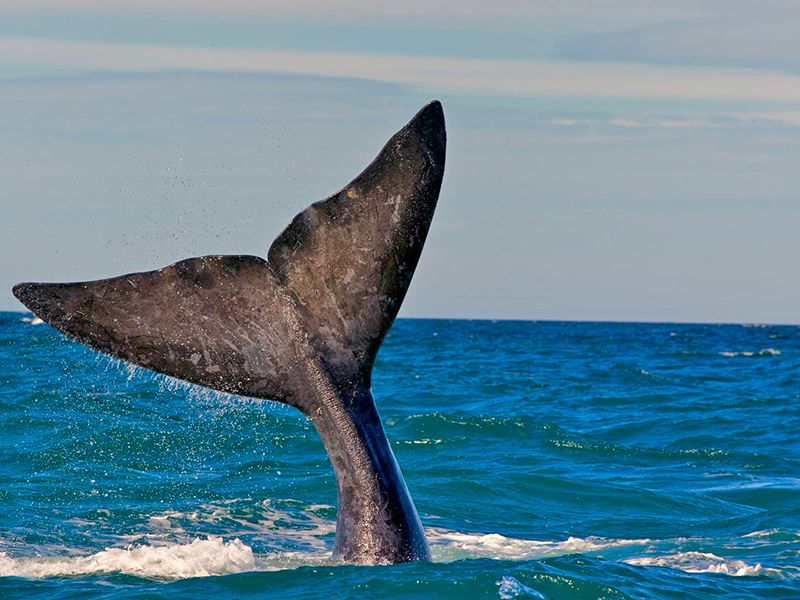 Whale Watching Experience in Sri Lanka