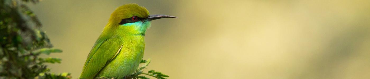 Bird watching in Kumana