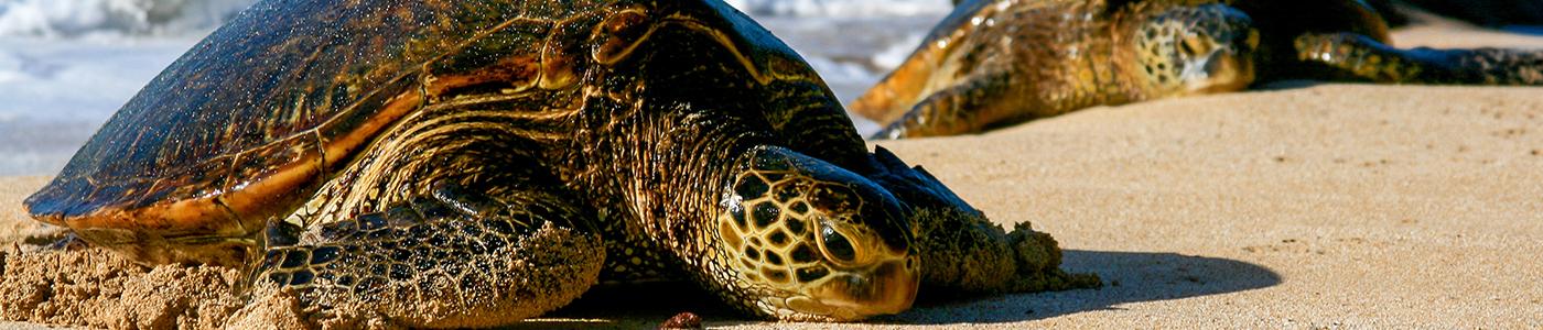 Turtle Hatcheries in Sri Lanka