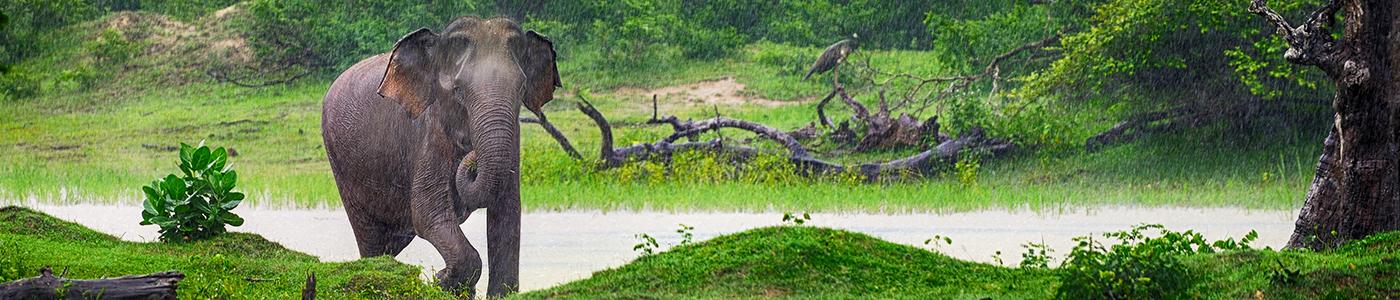 Elephants at Wasgamuwa National Park